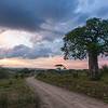 Africa. Tanzania. Sunrise at Tarangire NP.