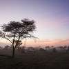 Africa. Tanzania. Sunrise in early morning fog at Ndutu in the Ngorongoro Conservation Area.