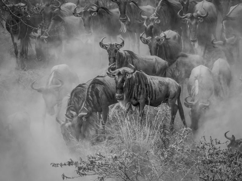 Kenya/Tanzania