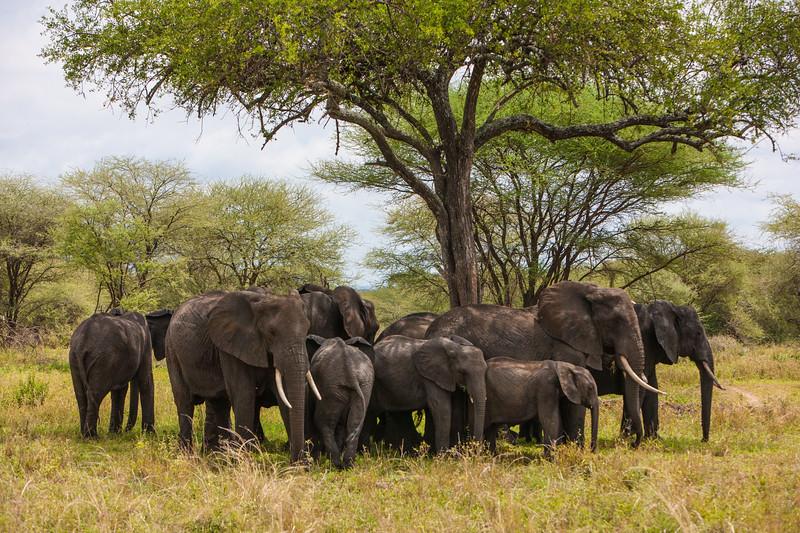 Tanzania09-0196