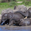 Africa. Tanzania. African elephants (Loxodonta africana) bathing at  Ndutu in Serengeti NP.