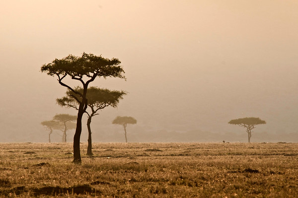 Kenyans and their Land