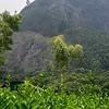 'Phantom Rock' near Suryanelli