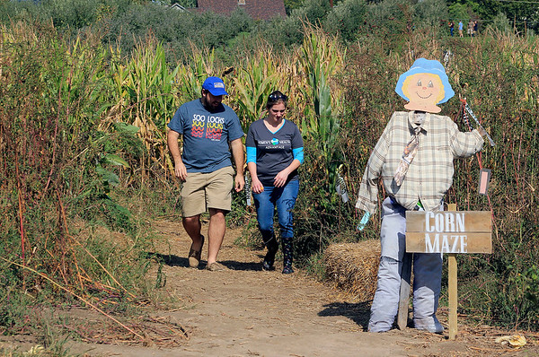 Roger Schneider | The Goshen News  Kyle Goehring and Steph Vimiprove of Fort Wayne leave the corn maze Saturday at Kercher's Sunrise Orchard and Farm Market.