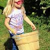 Roger Schneider | The Goshen News<br /> Autumn Bingaman, 5, Granger, carries a bushel basket as her family pickes apples Saturday at Kercher's Sunrise Orchard and Farm Market in Goshen.