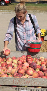 Roger Schneider | The Goshen News Aileen Webber of South Bend checks out the Cortland apples at Kercher's Sunrise Orchard and Farm Market's Fall Harvest Festival Saturday.