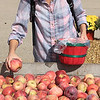 Roger Schneider | The Goshen News<br /> Aileen Webber of South Bend checks out the Cortland apples at Kercher's Sunrise Orchard and Farm Market's Fall Harvest Festival Saturday.