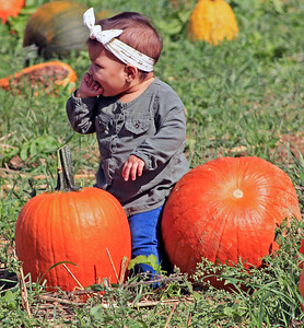 Roger Schneider | The Goshen News Patty Hernandez, 2, Elkhart, sits on pumpkins Saturday at Kercher's Sunrise Orchard and Farm Market. Patty was placed on the pumpkins by her parents, Valerie and Daniel Hernandez, who were taking her photograph.