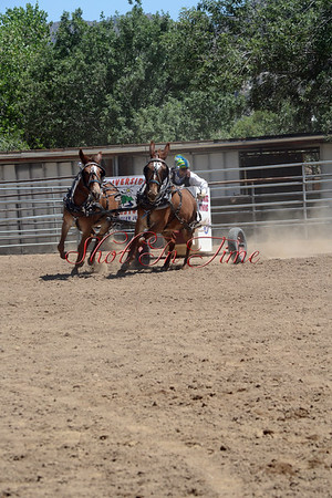 Kernville Mule and Donkey Show 2013