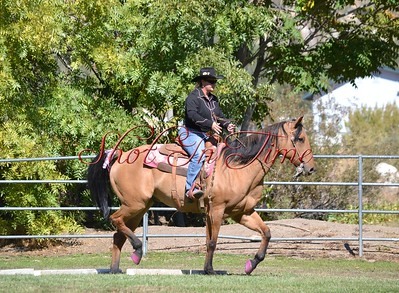 Trail and Western Dressage