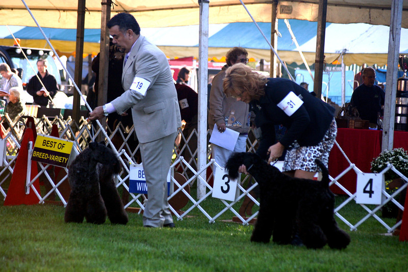 15-18 month dogs<br /> Dinnyesvarosi Mexico<br /> Krisma's Risky Business