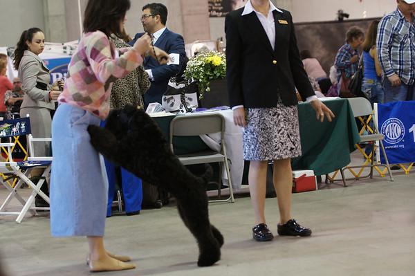 Sacramento Kennel Club kerries 2013