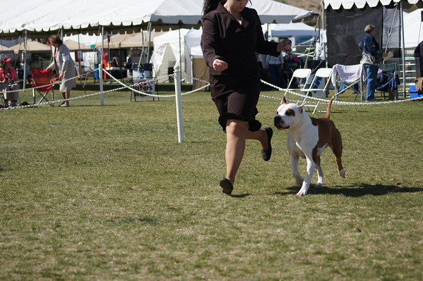 Sun Country Terrier 2013
