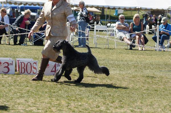 Sun Country Terriers kerries 2013