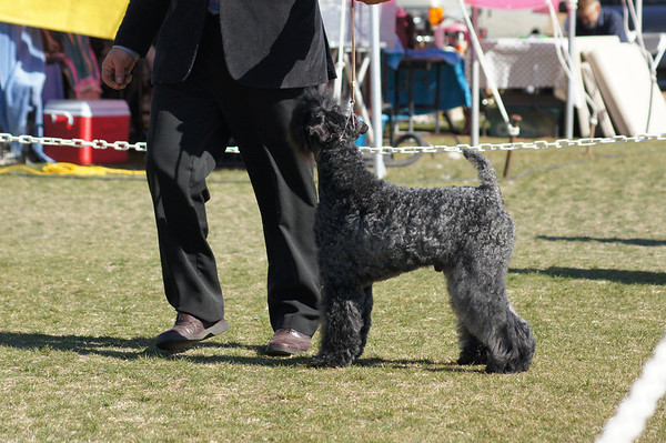Superstition Kennel Club kerries 2013