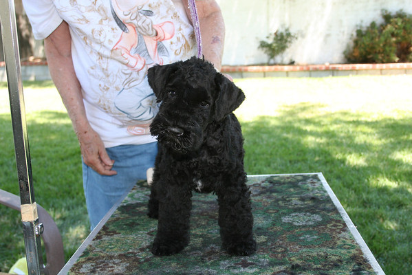 Mia puppies 8 weeks