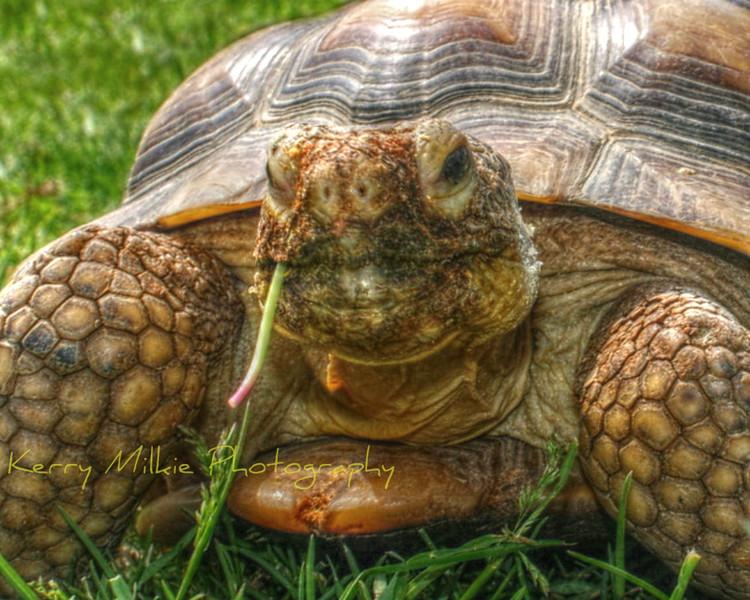 hmmm turtle