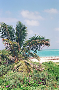 Beach at Fort Jefferson National Park