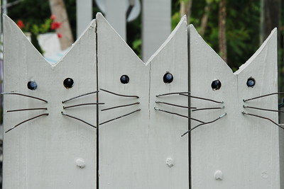 The Pussy Cat Gate