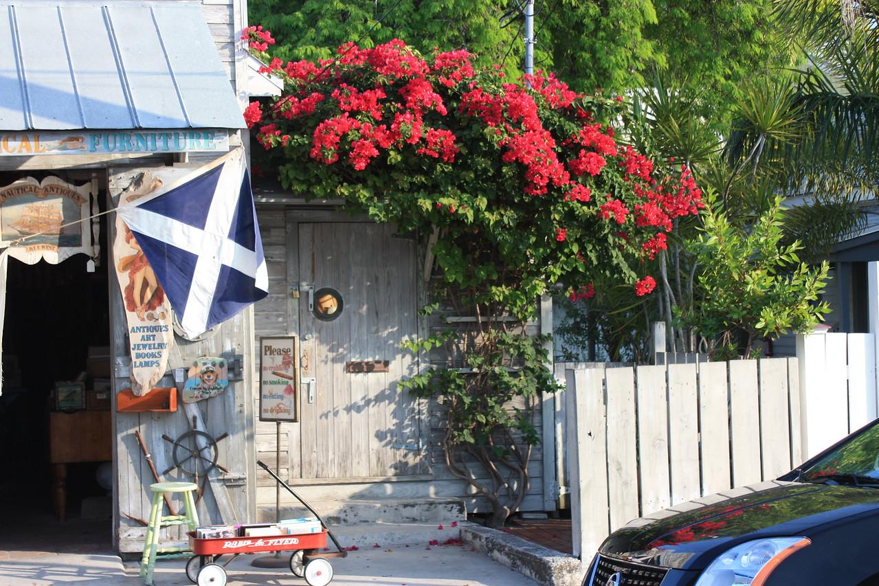 Red Bougainvilla
