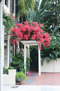 Red Bougainvilla