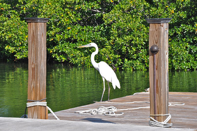 "Cow Key Marina is a small marina on Cow Key Channel that is a location for a few charter fishing boats, fuel, tackle and bait. It is most noteworthy as the location for the filming of the 1975 movie ""92 in the Shade"" written by Tom McGuane and starring Peter Fonda and Margot Kidder."