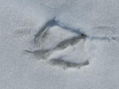 Canada Goose - track