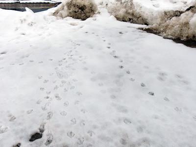 Mallard - tracks