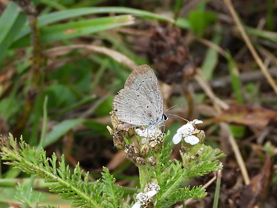 Summer Azure - colour faded from wear and tear