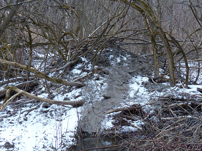 Beaver - lodge and trail
