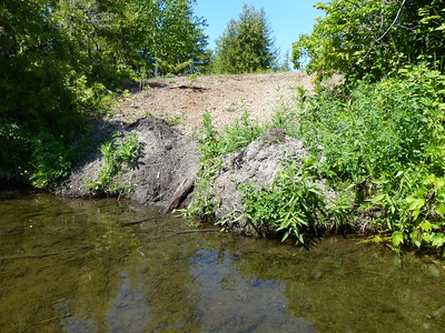 Beaver - scent mound