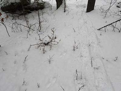 Fisher - tracks & trail