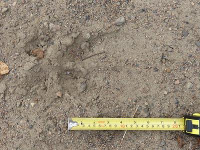 Moose - track