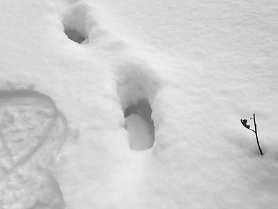 Moose - tracks