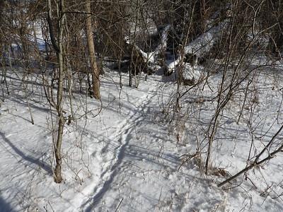 Porcupine - tracks & trail