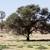 Acadia Tree