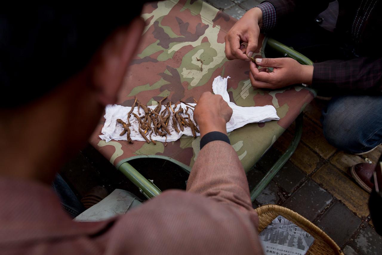 Buying and selling Yartsa Gunbu. Dzato.