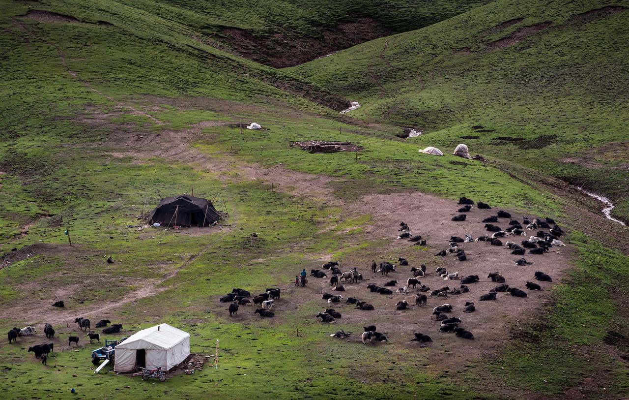 Nomad camp. Near the Gechak Nunnery.