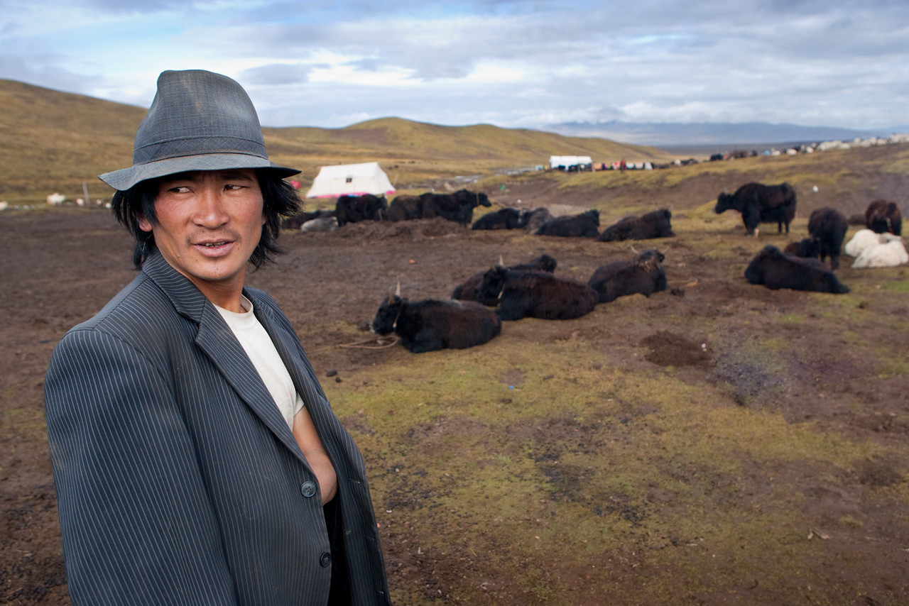Man tending his yaks. Nomad camp. Tongde, Amdo (Qinghai)