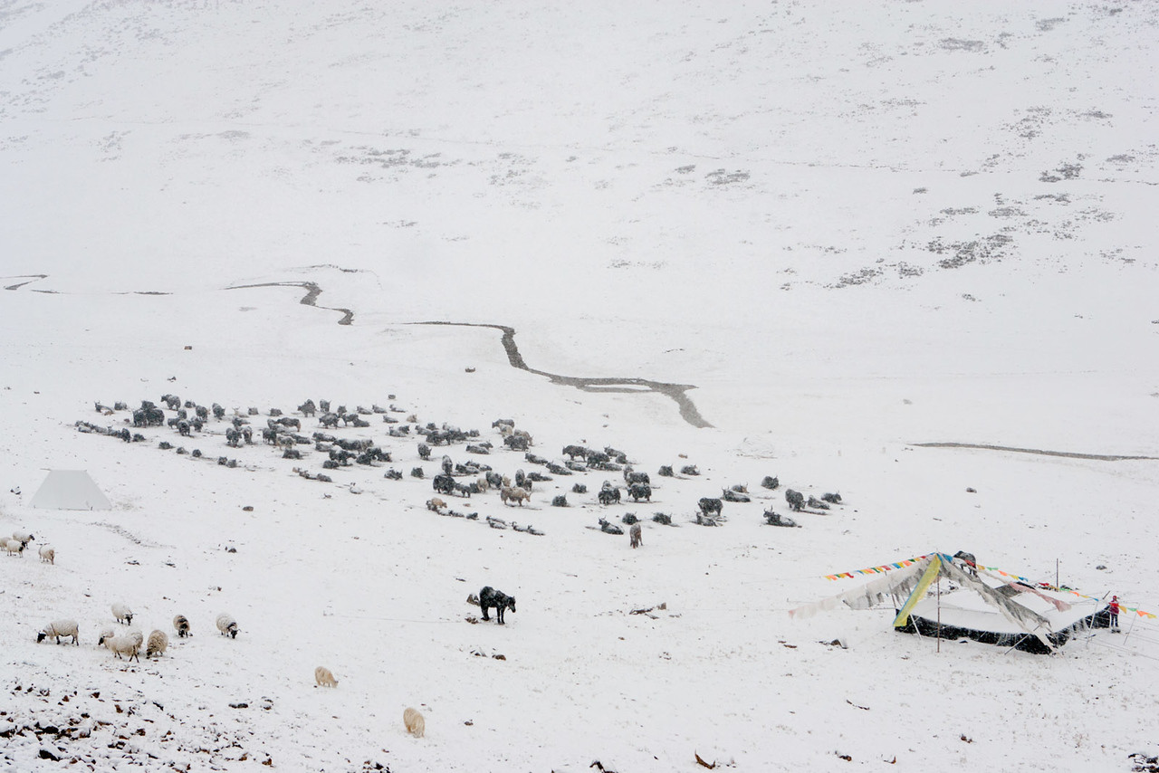Early snow. Nomad camp, Zhenqin, Kham (Qinghai)