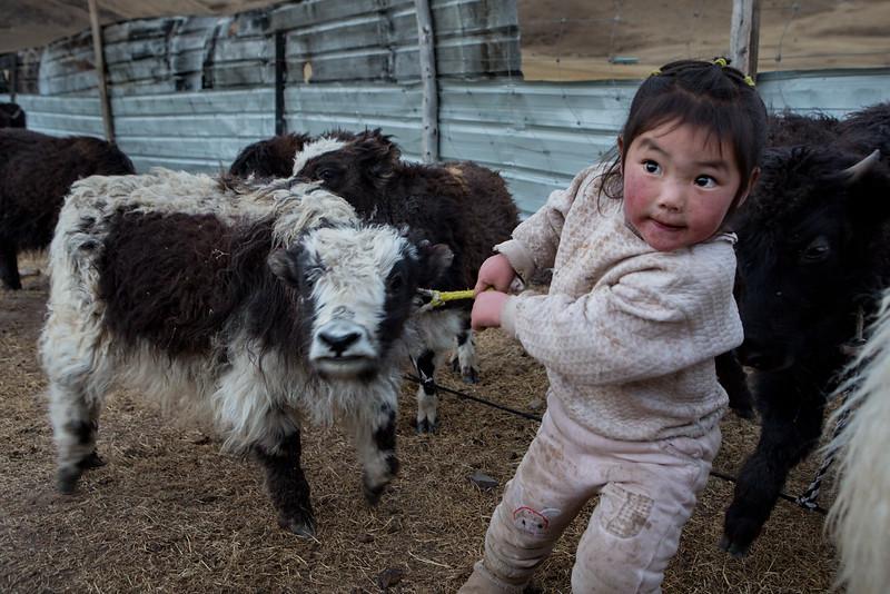 Yak calf and girl, near the Dzogchen monastery