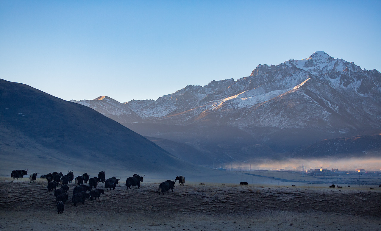 Early morning, near the Dzogchen monastery