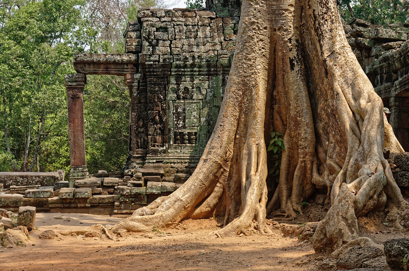 An enormous silk-cotton tree stands near the western of the temple buildings.