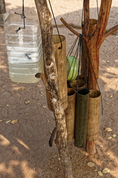 The bottom of the male flower is cut and the juice drains into one of these bamboo receptacles. As the bamboo tubes fill up, they are emptied into larger plastic containers.