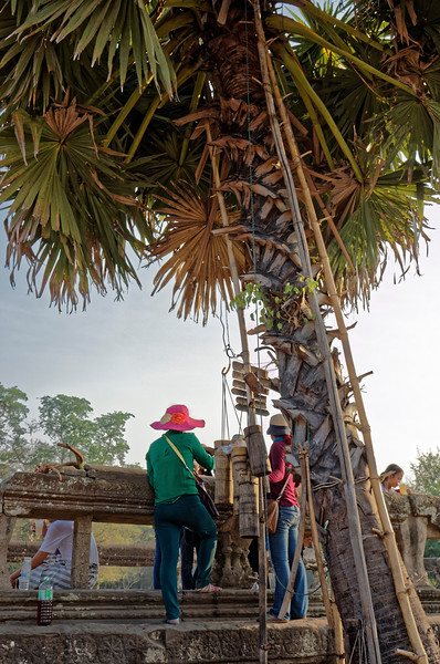 We were surprised to find these palm-sugar makers busily at work—right on the grounds of Angkor Wat!