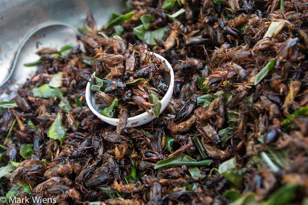 crickets (จิ้งหรีด)