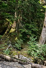 Bear country, north temperate rainforest, Khutzeymateen inlet, BC