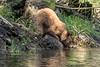 Thirsty cub