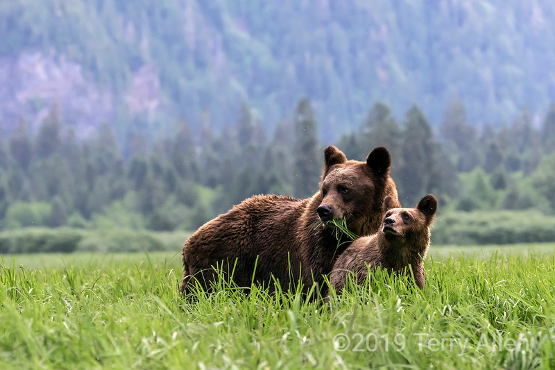 Mother and cub matching pose