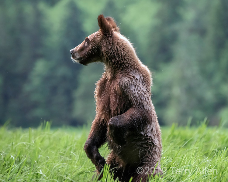 Cub standing tall